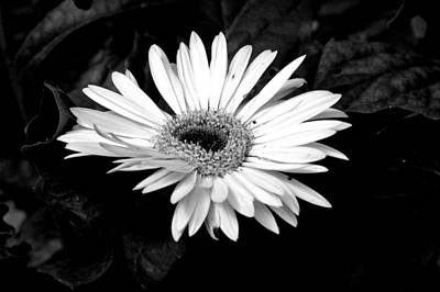 Photograph - Monochrome Flower by David Weeks