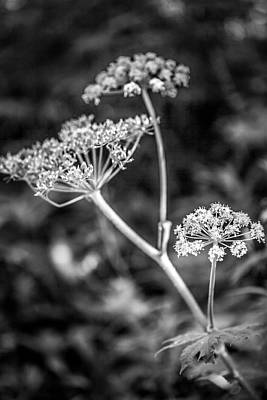 Photograph - Monochrome Flower Study by Marilyn Hunt