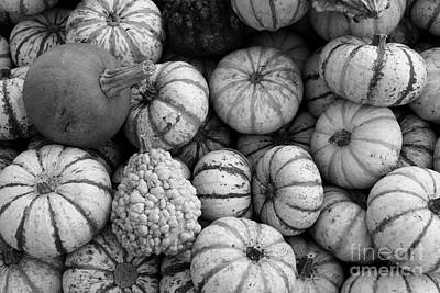 Natural White For Decorating Photograph - Monochrome Gourds by Robert Wilder Jr