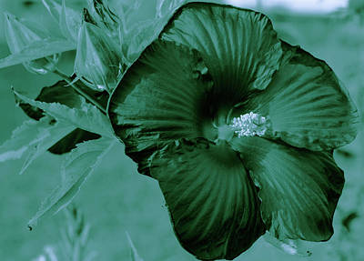 Photograph - Monochrome Hibiscus by Sherman Perry