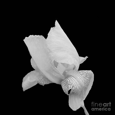 Photograph - Monochrome Iris  by Rachel Hannah