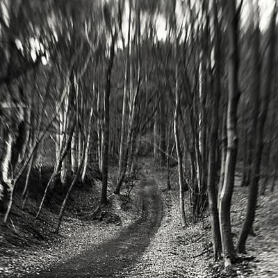 Forest Wall Art - Photograph - #monochrome #lensbaby #composerpro by Mandy Tabatt