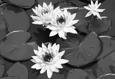 Digital Art - Monochrome Lilies by Milena Ilieva