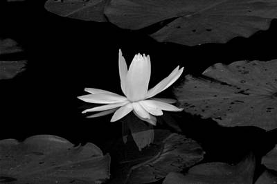 Photograph - Monochrome Lily 2 by David Weeks
