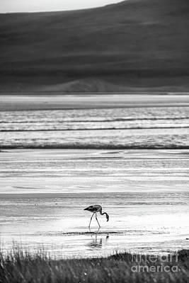 Photograph - Monochrome Pink Flamingo by Olivier Steiner