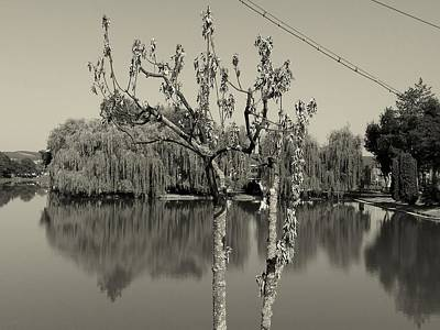 Photograph - Monochrome Reflections by Erika H