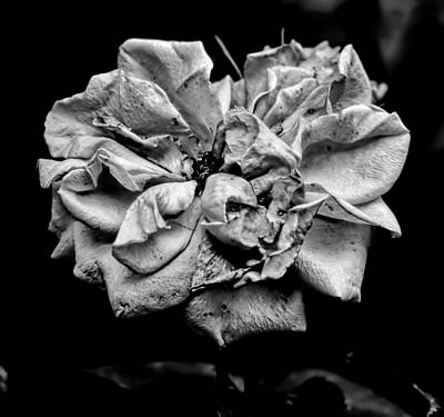 Photograph - Monochrome Rose August  by Leif Sohlman