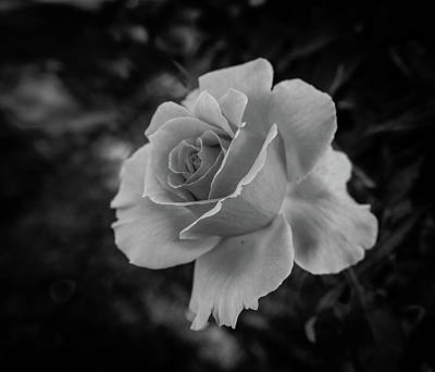 Monochrome Rose Macro Art Print