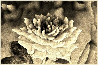 Digital Art - Monochrome Rose by Sonali Gangane