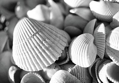 Photograph - Monochrome Seashells Details by Dan Sproul