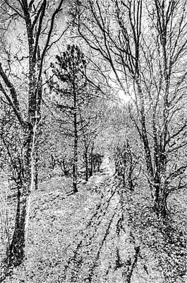 Photograph - Monochrome Snow Forest Art by David Pyatt