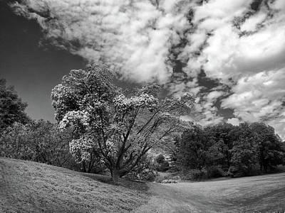 Photograph - Monochrome Spring by Jessica Jenney