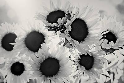 Photograph - Monochrome Sunflowers by Sandra Ramacher