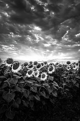 Photograph - Monochrome Suns by Matteo Viviani