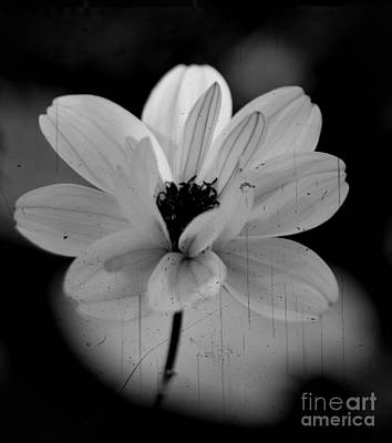 Photograph - Monochrome Tranquility by Chalet Roome-Rigdon