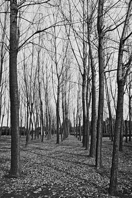 Photograph - Monochrome Trees by Lee Webb