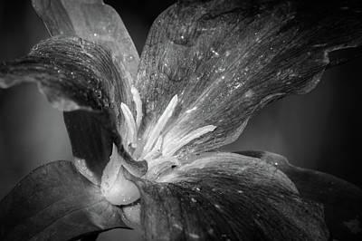 Photograph - Monoflower by David Heilman
