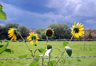Monsoon Sunflowers Art Print by Heather S Huston