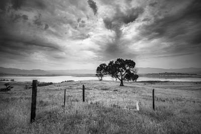 Photograph - Monsoonal Cottonwood by Alexander Kunz