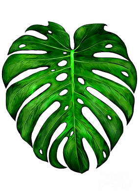 Painting - Monstera Deliciosa Painting by Three second