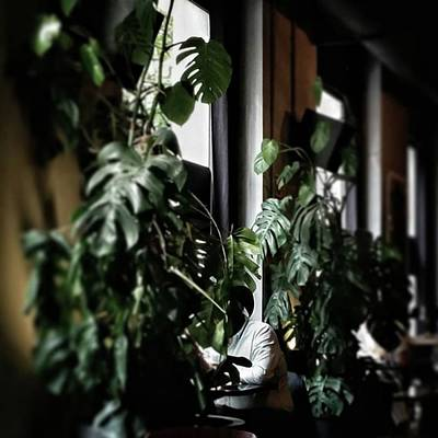 Restaurant Photograph - Monstera Deliciosa #plants by Rafa Rivas