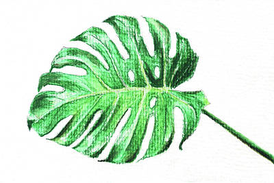 Painting - Monstera Leaf by Masha Batkova