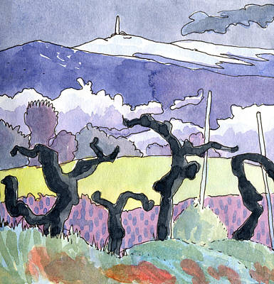 Provence Drawing - Mont Ventoux With Vines  by Elizabetha Fox