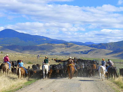 Cattle Drive Photograph - Montana Cattle Drive by Cheryl Gordon