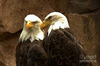 Photograph - Montana Eagle Pair by Adam Jewell