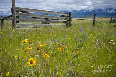 Photograph - Montana Essence by Idaho Scenic Images Linda Lantzy