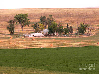 Photograph - Montana Harvest Time by David Bearden