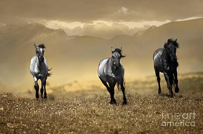 Horse Photograph - Montana Horses by Wildlife Fine Art