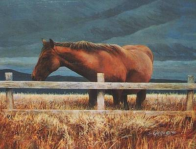 Montana Mare Study Art Print by Steve Greco