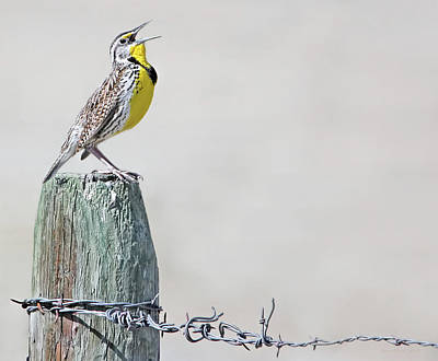 Meadowlark Photograph - Montana Meadowlark's Spring Song by Jennie Marie Schell