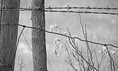 Photograph - Montana Rustic Fence And Weeds Black And White by Jennie Marie Schell