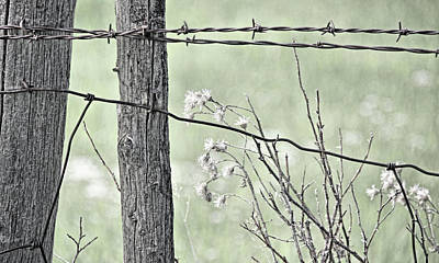 Photograph - Montana Rustic Fence And Weeds Green  by Jennie Marie Schell