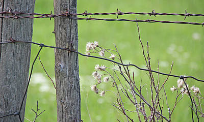 Photograph - Montana Rustic Fence And Weeds  by Jennie Marie Schell