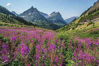 Photograph - Montana Summer Wildflowers by Peter Tellone