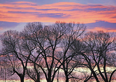 Art Print featuring the photograph Montana Sunrise Tree Silhouette by Jennie Marie Schell