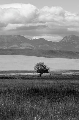 Photograph - Montana Tree And Mountains  by John McGraw