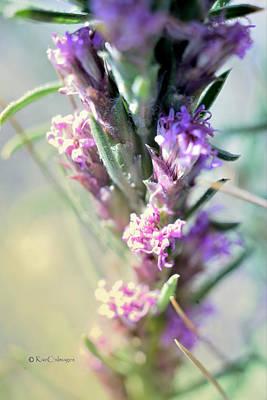 Photograph - Montana Wildflower by Kae Cheatham