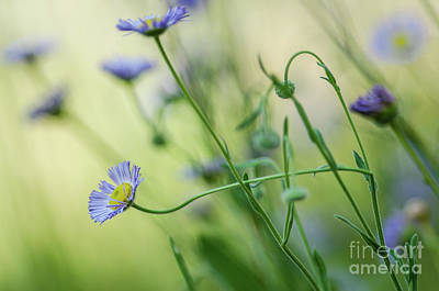 Photograph - Montana Wildflowers by Nick Boren