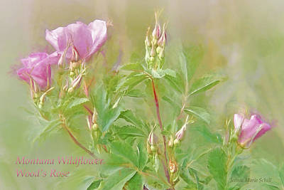 Photograph - Montana Wildflowers Wood's Rose by Jennie Marie Schell