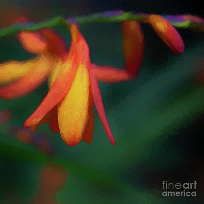 Digital Art - Montbretia by Liz Leyden