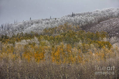 Photograph - Monte Cristo Autumn Snow by Spencer Baugh