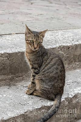 Homeless Pets Photograph - Montenegro Kotor Kitty by Antony McAulay