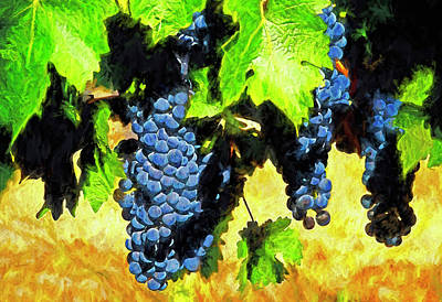 Digital Art - Montenegro Vineyard by Dennis Cox Photo Explorer