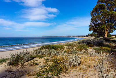 Photograph - Monterey Beach And Flora by Derek Dean