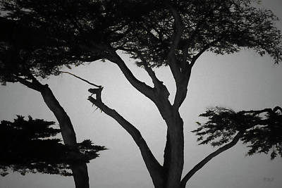Photograph - Monterey Cypress I Bw by David Gordon