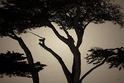Photograph - Monterey Cypress I Toned by David Gordon